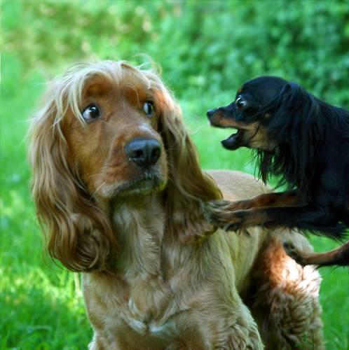 Снятся добрые собаки