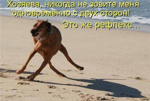 Смешные картинки про работу с животными